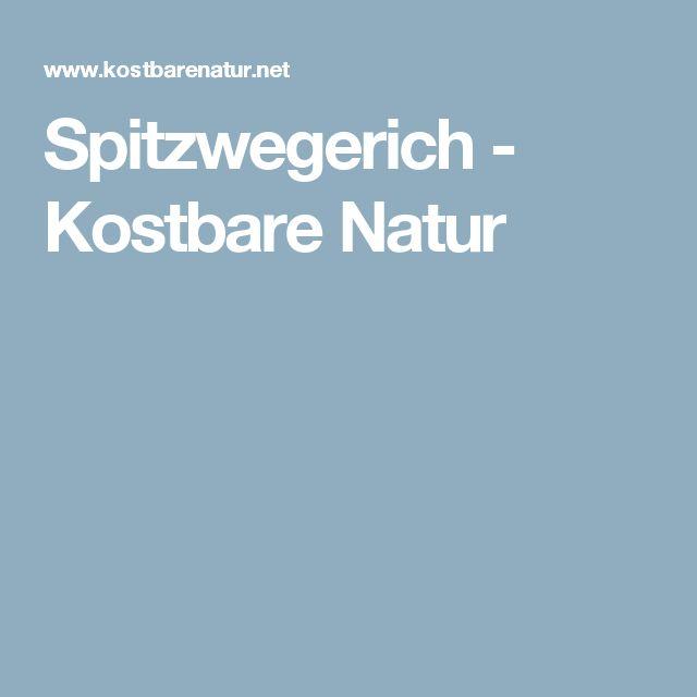 Spitzwegerich - Kostbare Natur