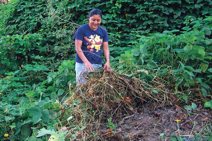 Frijol como cultivo de cobertura / Foto: Gabino López