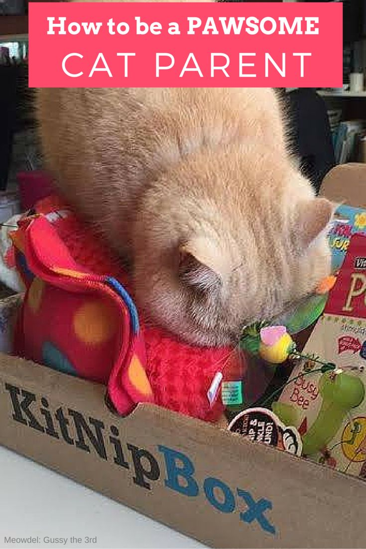Order a box of goodies for your cat today at —> https://www.kitnipbox.com/?utm_source=pinterest&utm_medium=cpc&utm_content=Gussy-text&utm_campaign=AllPetPhotography and treat your kitty to toys, treats, and other wholesome products. Your purchase will also help us support #cats in need!
