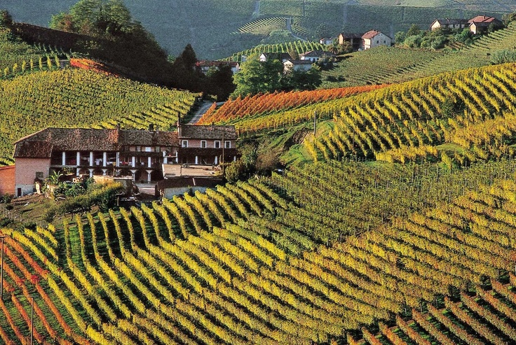 Piedmont - We love our region!!!!! How about a wine tour?