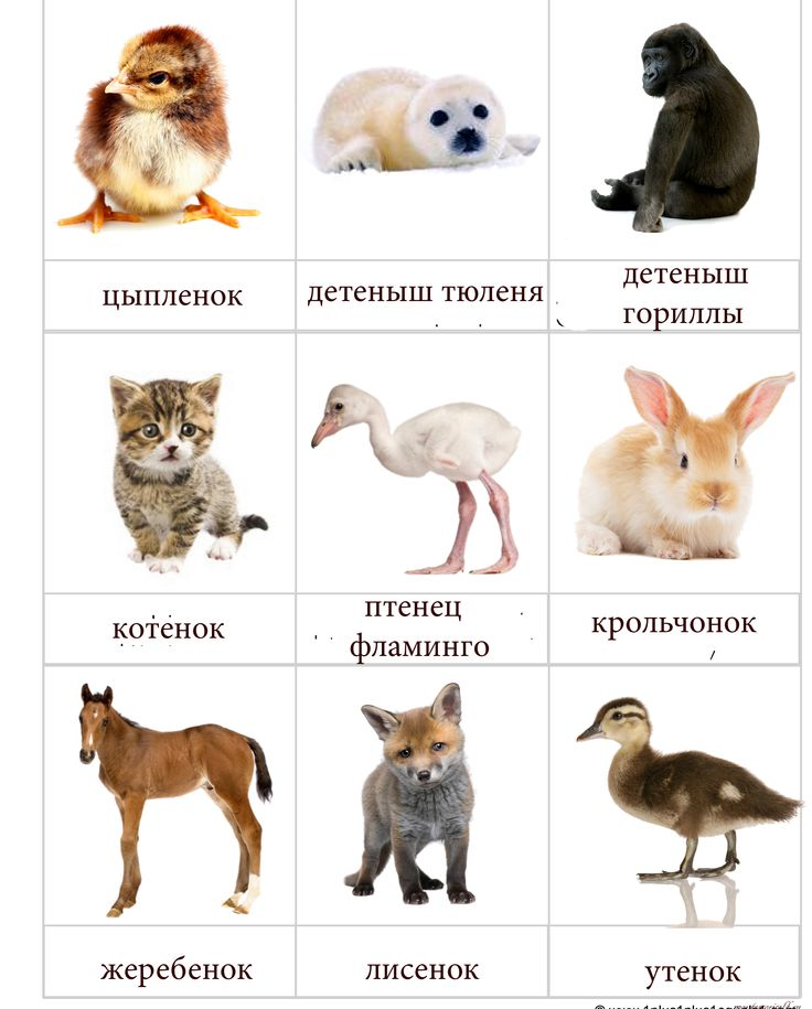 Картинки животные с детенышем для детей