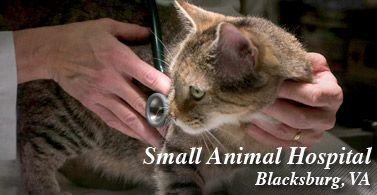VT Small animal hospital