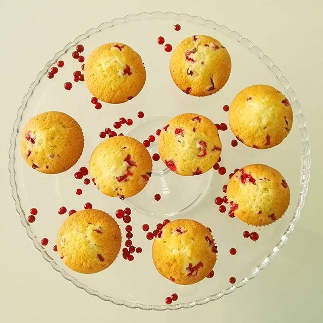 #leivojakoristele #puolukkahaaste Kiitos @annatuovinen