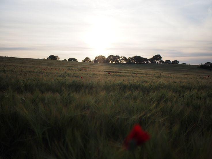 A fantastic landscape ....