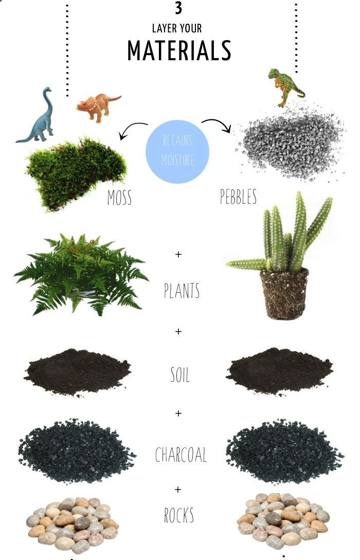 How to make a Terrarium in 4 steps … The size of your container will affect the amount of materials you will need and use: 1. The first layer is rocks, which you can purchase at pet, garden or craft stores. Add enough to the bottom for adequate drainage. 2. The next layer is activated charcoal, which you can get at pet or garden stores (it is used in fish tanks). Add a thin layer over the rocks. 3. Depending on the depth of your container, you will next add soil. Leave enough ...