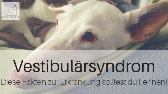 Hüftdysplasie Hund Einschläfern