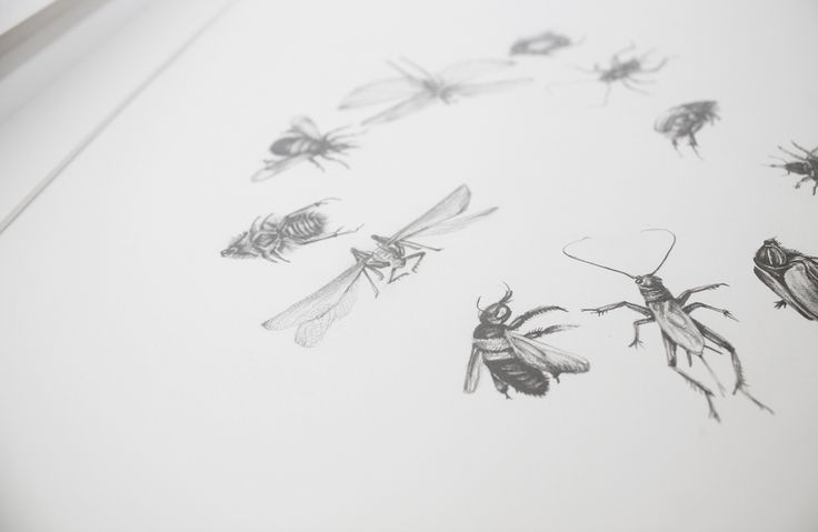 A pencil drawing  - study of a variety on insects and bugs. BY Pencilheart Art on Behance.