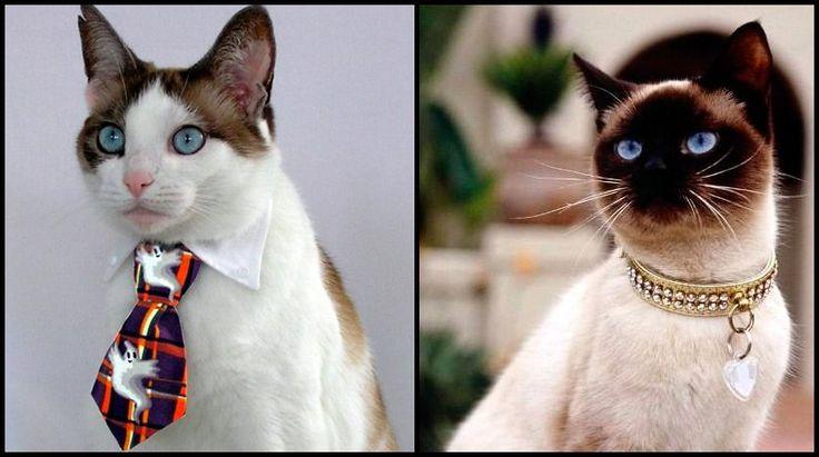Очень стильные кошки