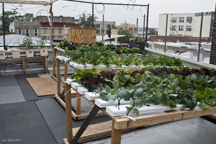 how to build a rooftop farm