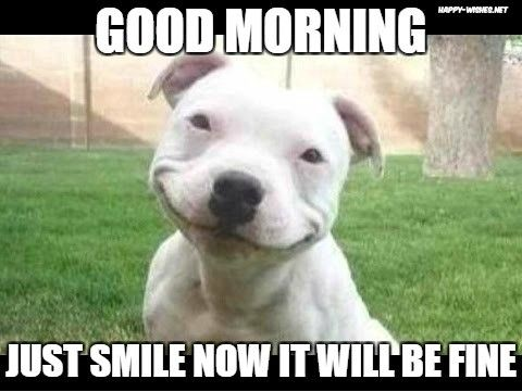 Happy Dog In Good Morning Memes Good Morning Dog Smiling Dogs Funny Dogs