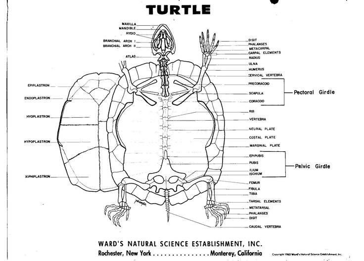209 best Turtles, Tortoises, and Terrapins images on