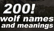 Wolf names have been used for centuries in different countries throughout the world. Many of these names have been adopted by people as strong identifications of themselves to the world. I've listed below some of the most famous - and not so famous wolf names and their meanings. Some are male wolf names, some are female, and some can be interchanged between the two. It's meant as simply a starting point in your search for the perfect name. If you're looking for werewolf names, check out…