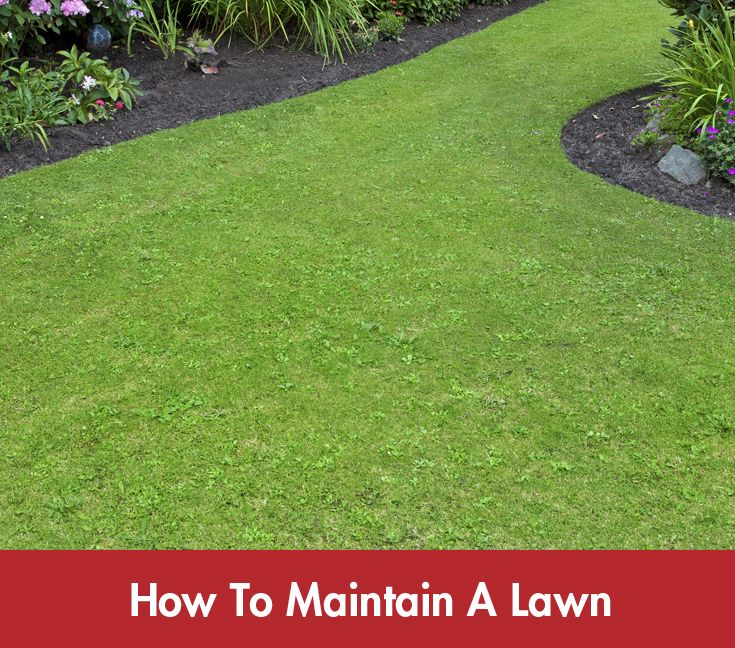 Click on the image above for Bunning's guide on maintaining a beautiful part of your home's landscape! #Lawn #Summer