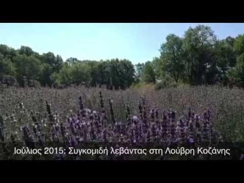 Ετοιμη η νεα σοδια μας! | Lavender Oil in Greece