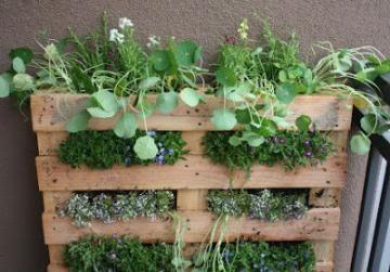 Κήπος με αρωματικά βότανα σε μία παλέτα!