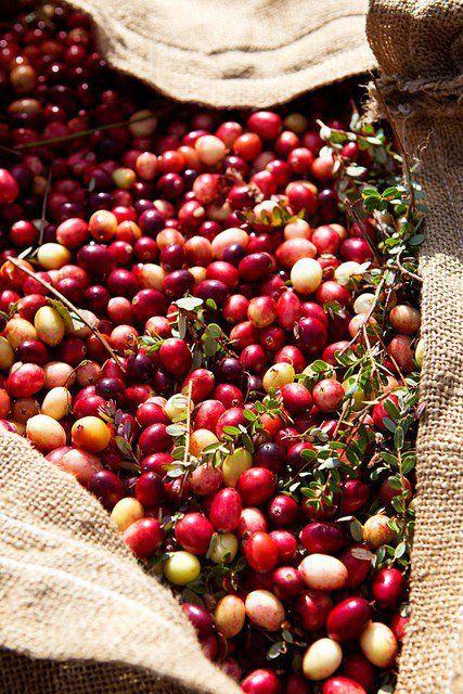 cranberries: Food Recipes, Cranberries Sauces, Red Berries, Orange Zest, Wreaths Make, Red Grape, Sisterhood Ideas, Cherries, Vintage Rose