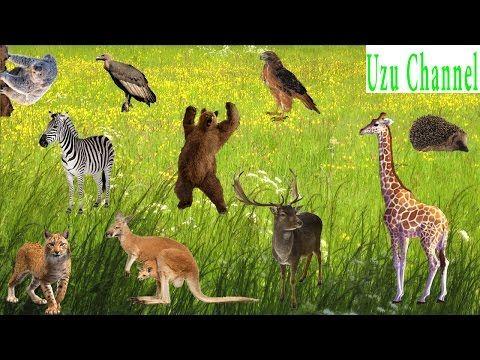 Sonidos de animales salvajes en la selva   Sonidos de animales para niños - YouTube