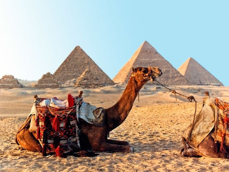 How to have Egypt's pyramids to yourself. How to tiptoe around chimps in Tanzania. This lightning round of trips across Africa will have you in planning mode immediately.