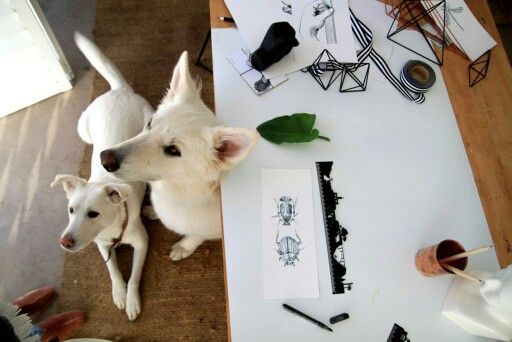 Shooting our lastest products with 2 over eager assistants.