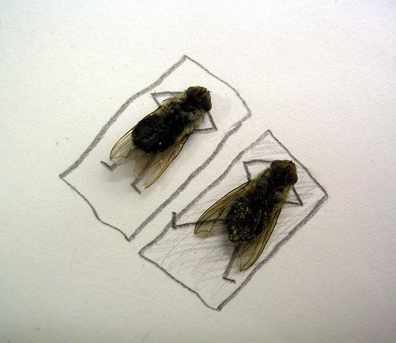 Magnus Muhr takes funny pictures with dead flies!!