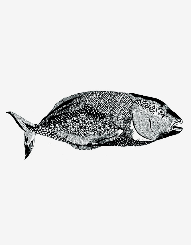 Fishes of the Andaman Sea - Chrysa Koukoura Illustration