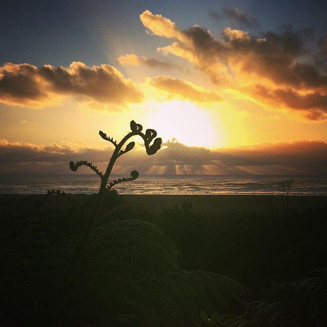 After a shity rainy day in Wanaka I have to admit that I miss the Westcoast beautiful sunset... But I miss my little Westcoast family even more    #NZ #NewZealand #NouvelleZelande #NZmustdo #Punakaiki #westcoast #nzwestcoast #sunset #fern #fougère #soleil #nature #beautifulsky #kiwi_photos #destinationnz #love_new_zealand