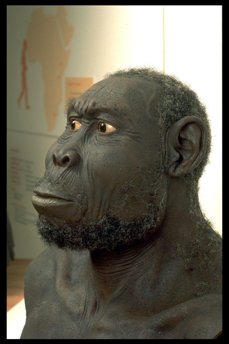 forma de la cara (principalmente en la región supraorbital y malar, que presenta muy larga, profunda e inclinada hacia delante); medidas craneales en su conjunto (un 45% de las medidas que se compararon entre las dos especies superan el dimorfismo sexual de los gorilas) y el volumen craneal (alrededor de los 750 cm3, frente a los 650 cm3 del Homo habilis), aunque en 2007 la capacidad craneana de Homo rudolfensis ha sido estimada por Timothy Bromage, antropólogo de la Universidad de Nueva…