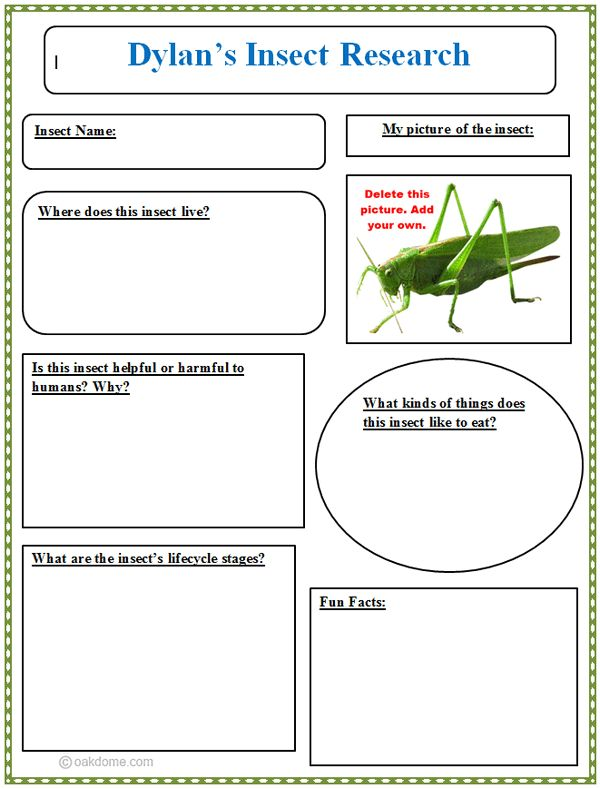 book report graphic organizer 3rd grade Printable graphic organizers - story webs, writing hamburger spelling grade 2 spelling grade 3 spelling grade 4 spelling grade 5 more spelling worksheets.