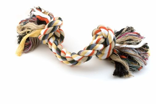 Make your own pet toy using old t-shirts!