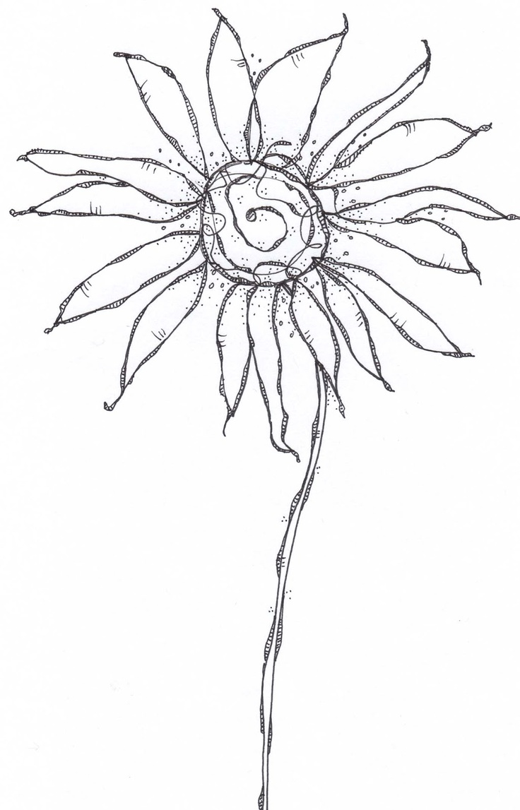 Carol Sloan Studios: Flower Line Drawings