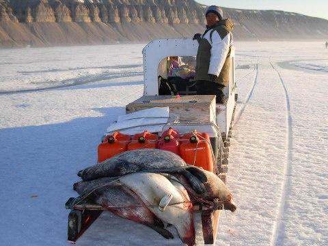 nunavut hunting regulations