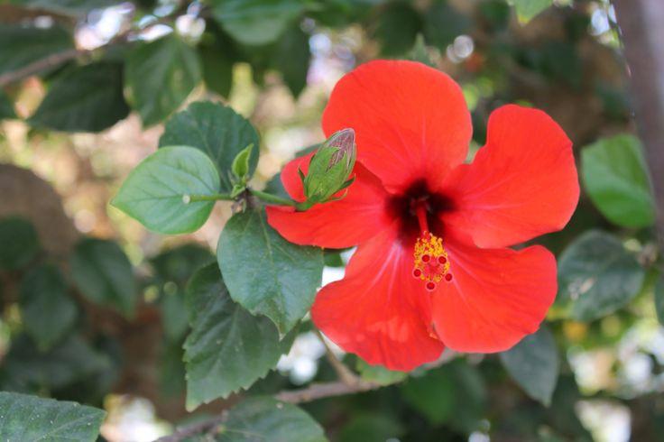 Nydelig blomstring