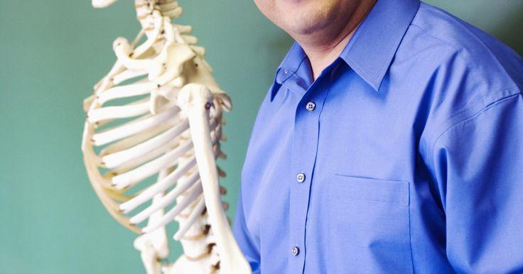 Juegos para aprender sobre el esqueleto humano para niños de segundo grado. Enseñar anatomía a niños puede ser complicado, especialmente cuando se trata del esqueleto humano: son poco más de 200 huesos y sus formas y funciones son diversas. Pero lo bueno de trabajar con niños es que pueden sorprenderte con ingeniosas respuestas sobre el funcionamiento del esqueleto o incluso pueden aprenderse los nombres de los ...
