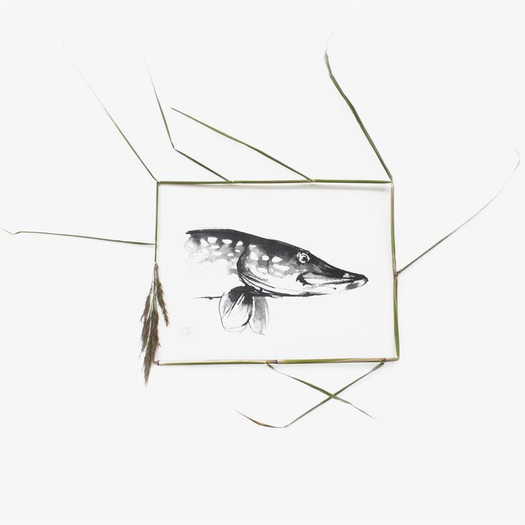 Northern Pike in the Reeds. Teemu Järvi Illustrations. www.teemujarvi.com
