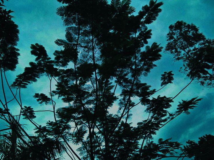 of swaying leaves on blues. #natureshot