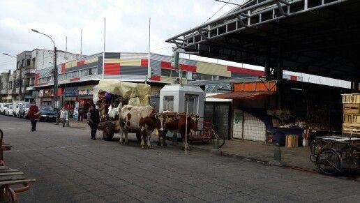 Medio de transporte de los indios  !!!!!
