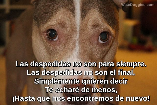 Mensagens De Despedida: Las Despedidas No Son Para Siempre Frases De Perros