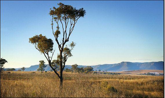 Broke NSW 2 Australian Countryside by WallPrintPhotography on Etsy