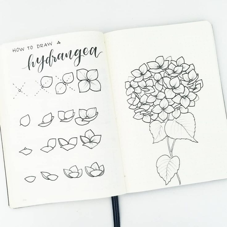 """8,273 Likes, 138 Comments - Liz • Bullet Journal (@bonjournal_) on Instagram: """"How to draw hydrangea flowers. On the left, i break down the steps to drawing the individual…"""""""