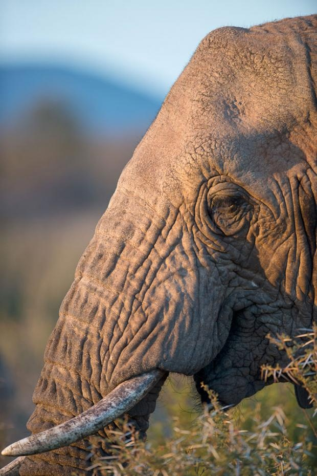 Photographic Safari | Elephant feeding | Lawrence Gobetz