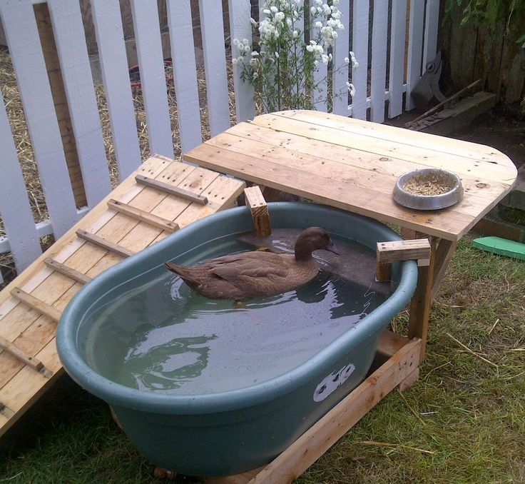 Ramp and deck built around a plastic water trough. All wood is reclaimed from shipping palettes sourced for free. Plastic spigot added to trough, and a ledge dropped in near ...