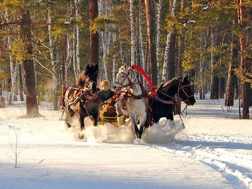 The Russian troika (harness driving) in Altai Krai, Siberia/Russia