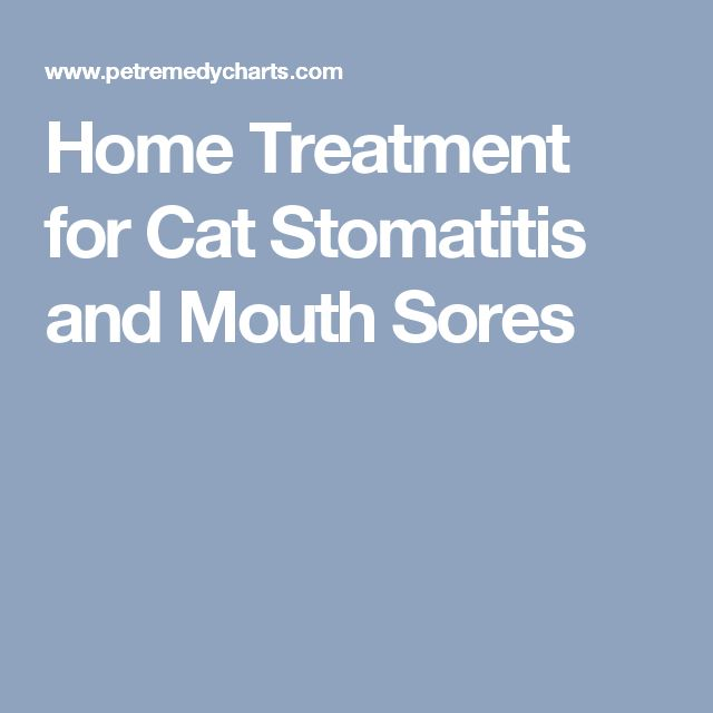 Home Treatment for Cat Stomatitis and Mouth Sores