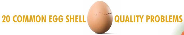 20 Common Egg Quality Shell Problems ~ Clicking the link below will take you to a chart showing different eggs with abnormal shells.  Underneath it will tell you the possible causes.  At the top of the chart you can click to + sign to enlarge it.  http://www.alltech.com/sites/default/files/alltech-egg-shell-quality-poster.pdf