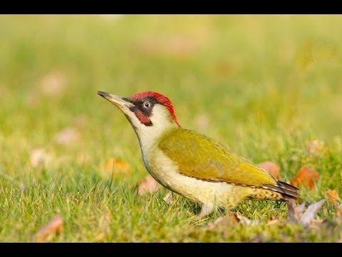 NABU und LBV: Entdecken Sie den Vogel des Jahres 2014