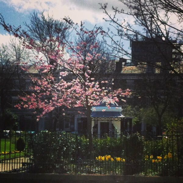 Spring at Abercromby Square, University of Liverpool
