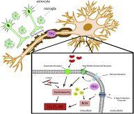 Magnesium sulfate for non-eclamptic status epilepticus
