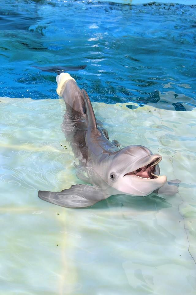 Winter...The dolphin from Dolphin Tale.  Great Movie to watch.  Winter is located in Clearwater, FL.  :)