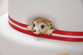 meerkat cake - Google Search