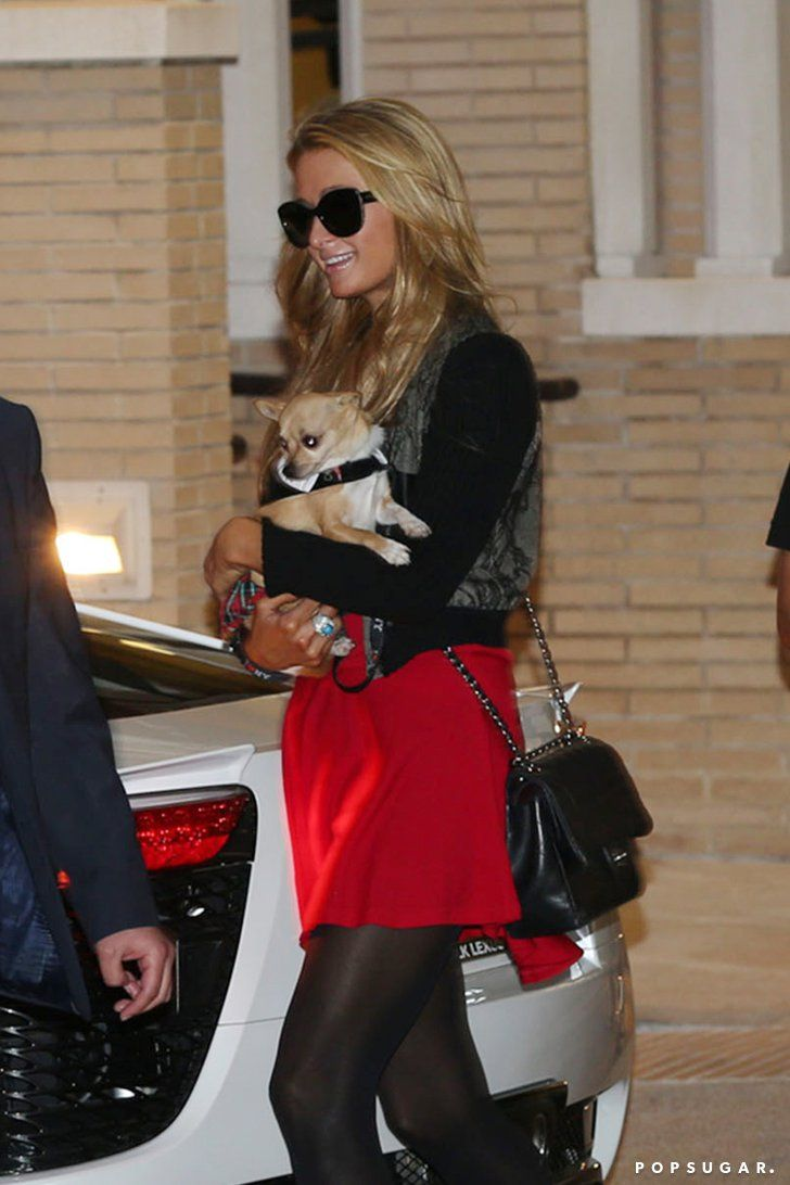 Pin for Later: Can't-Miss Celebrity Pics!  Paris Hilton took her dog shopping in Beverly Hills on Wednesday.